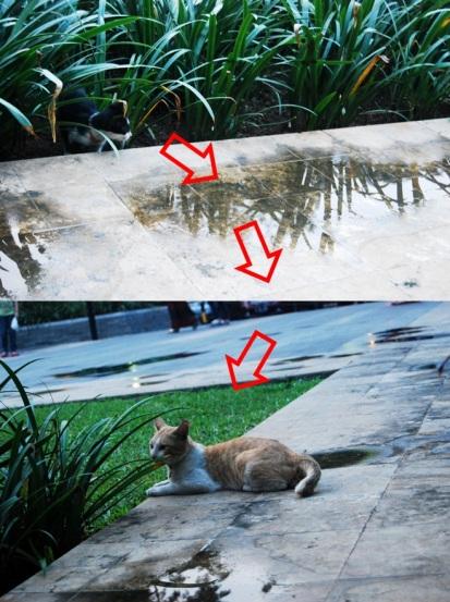 Kuci meong penasaran sama meong kuning