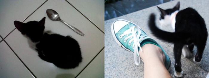 Kuci meong, antara sendok dan sepatu