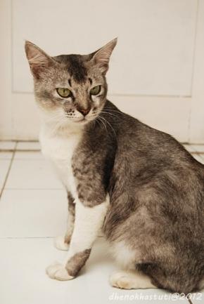 foto dhenok - kucing rizki 2