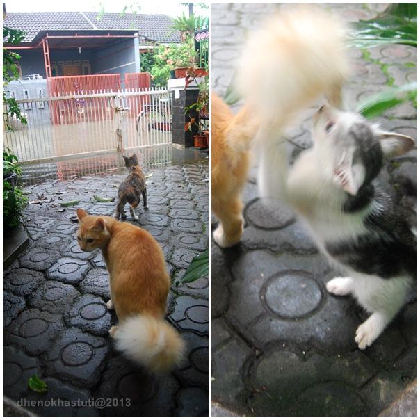 dhenok - banjir kucing 1