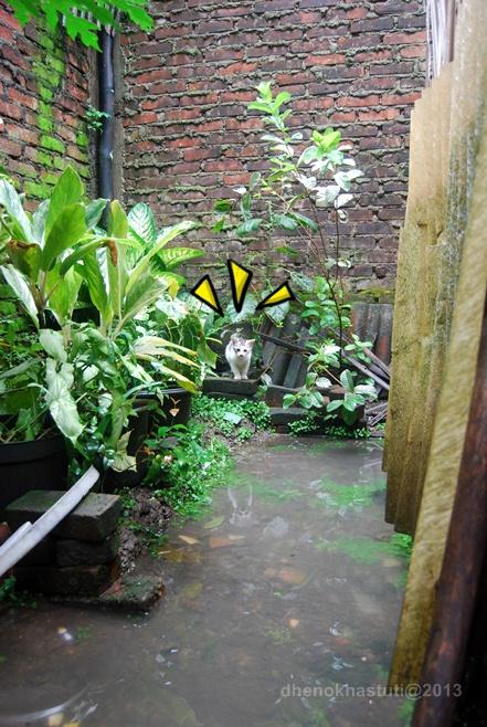 dhenok - banjir kucing 2