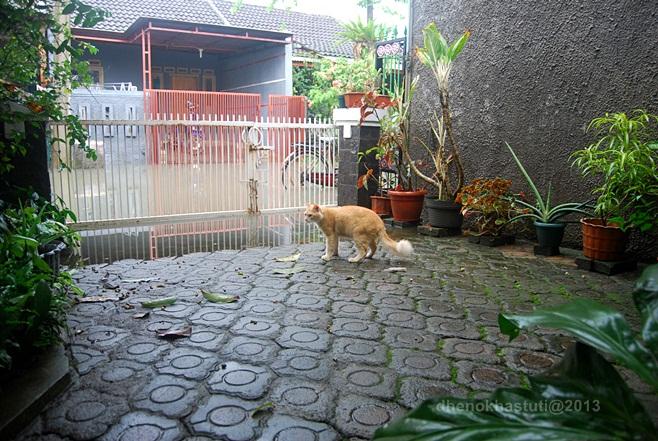 dhenok - banjir kucing 3