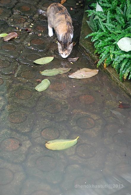 dhenok - banjir kucing 4