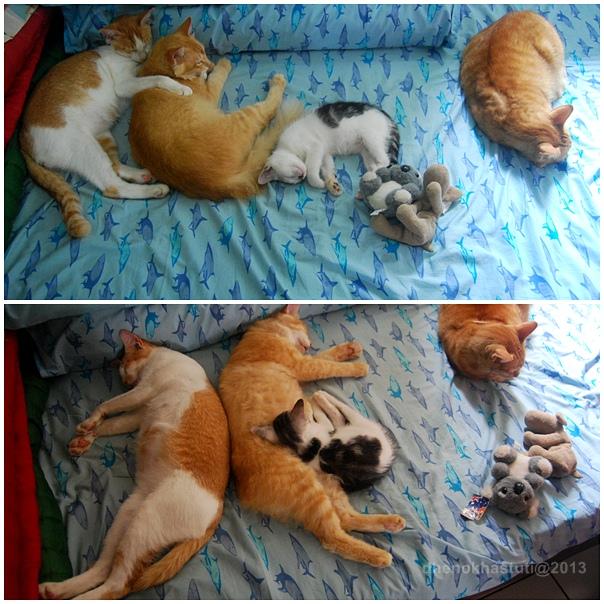 dhenok - banjir kucing 5