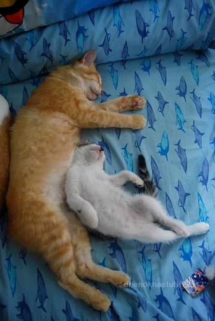 dhenok - banjir kucing 6