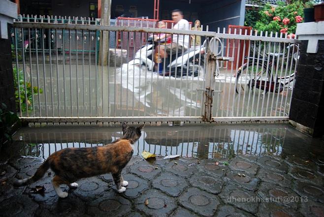 dhenok - banjir kucing 8