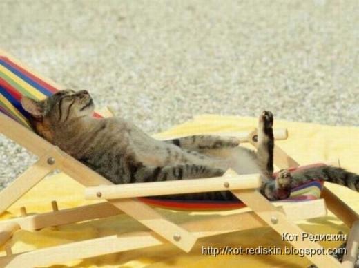 cat sun tanning