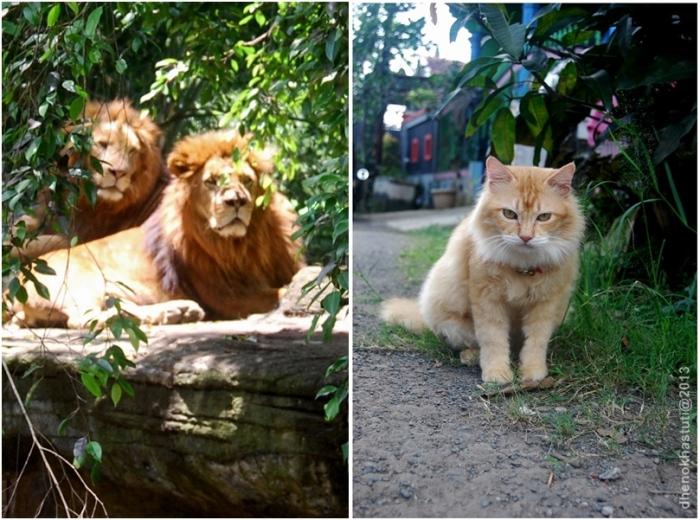 dhenok - singa vs naga