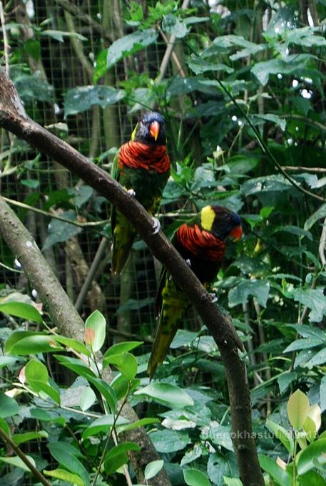 dhenok - taman safari - burung