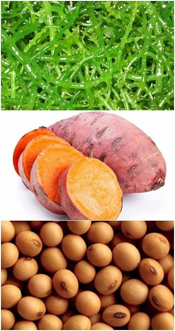 jlmc - makanan sehat ala jepang