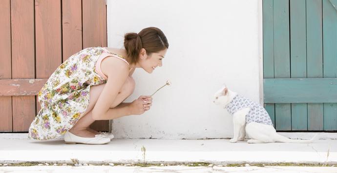 jlmc - jepang dan kucing sewaan