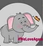 agam gajah kecil