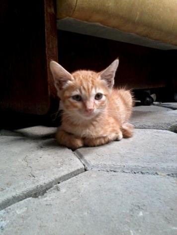 omara bayi kucing kuning 2