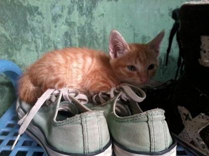 omara bayi kucing kuning 3
